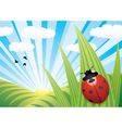 ladybird on leaf vector image vector image