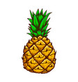 pineapple in engraving style design element vector image vector image