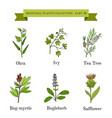 vintage collection hand drawn medical herbs and vector image vector image