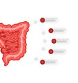medicine biology concept infographics colon vector image vector image