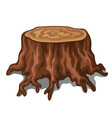 old stump a tree with roots isolated on white vector image vector image