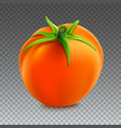 red whole tomato isolated on transparent vector image vector image