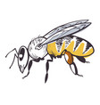 bee apiary icon honey product and beekeeping vector image vector image