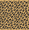 leopard print brown black fur seamless pattern vector image vector image