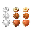 set whole and half hazelnut color vector image vector image