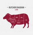 cut of lamb poster butcher diagram vector image