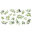 Flat set of branches with ripe olives and vector image