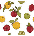 apples spices and berries vector image