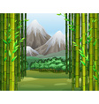 Bamboo jungle with mountains background vector image vector image