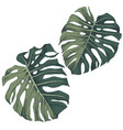 hand drawn leaves tropical monstera vector image vector image