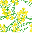 Mimosa vector image