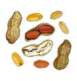 set of peanuts vector image vector image