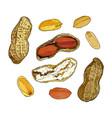 set peanuts vector image vector image