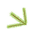 christmas tree branch isolated new year vector image