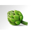 fresh artichokes isolated on white background vector image vector image