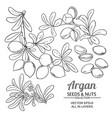 argan branches set vector image vector image