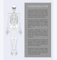 human skeleton text banner vector image