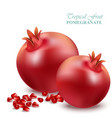 pomegranate realistic isolated on white vector image vector image