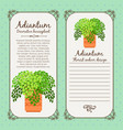 vintage label with adiantum plant vector image