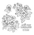 dog rose flowers set vector image vector image