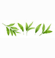 set realistic green tea leaves and sprouts vector image vector image