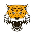 Angry Tiger Face Roaring tiger head vector image