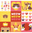 cats heads cute animal faces vector image vector image