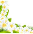 Frangipani Flowers Borders With Leaf vector image