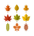 simple autumn leaf symbol graphic design template vector image