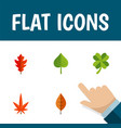 flat icon leaves set of leafage aspen frond and vector image vector image