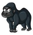 gorilla with black fur vector image vector image