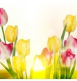 Green grass and pink tulips EPS 10 vector image