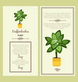 greeting card with dieffenbachia plant vector image vector image