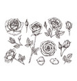 hand drawn roses sketch rose flowers with thorns vector image