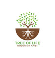 tree life graphic design template vector image vector image