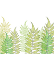 card with fern vector image vector image