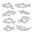 fish sketches salmon carp tuna and sheatfish vector image vector image
