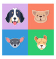 four canine heads pedigreed dogs doggie concept vector image vector image