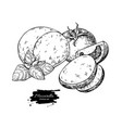 mozzarella cheese drawing hand drawn round vector image vector image