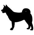 silhouette of american akita vector image vector image