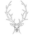 sketch beautiful deer vector image