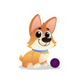 little playful corgi with ball cartoon dog with vector image