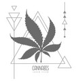cannabis leaf silhouette on triangle background vector image
