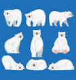 cartoon polar bear white bears arctic wild vector image
