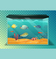 glassware aquarium or fish tank tropical fishes vector image