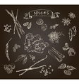 Set of spices vector image vector image