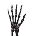 skeleton hand with bones isolated on white vector image vector image