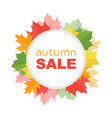 autumn sale banner with autumn leafs vector image
