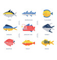 collection of sea and river fish and lettering vector image vector image