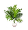 decorative houseplant planted in ceramic pot vector image vector image